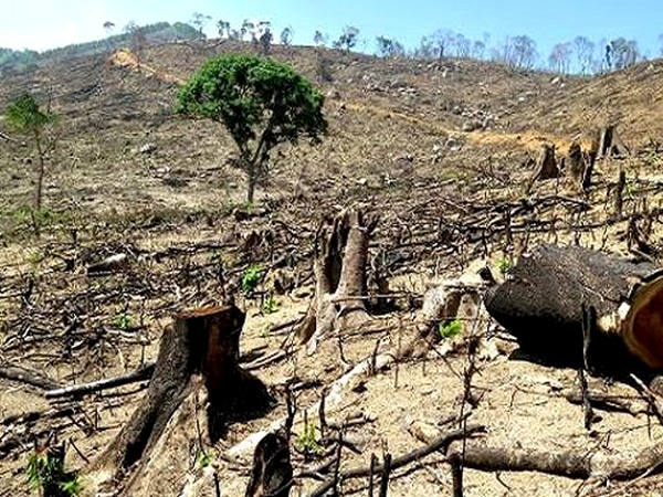 Thực trạng phá rừng trái phép hiện nay ở một số địa phương