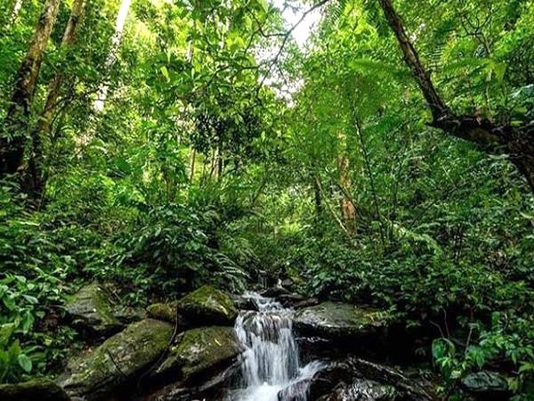 Vườn quốc gia Pù Mát thuộc hệ sinh thái rừng nguyên sinh của rừng ẩm nhiệt đới vùng Bắc Trường Sơn Việt Nam