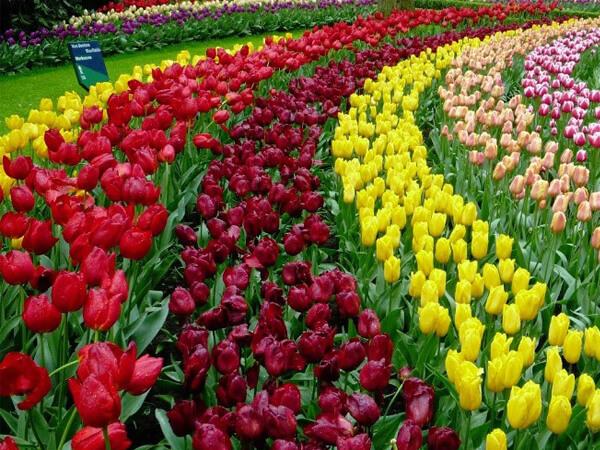 hoa Đà Lạt