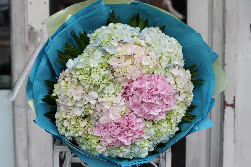 tặng hoa cẩm tú cầu Ngày 20 - 11