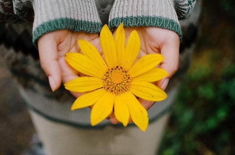 Ý nghĩa của hoa dã quỳ trong cuộc sống
