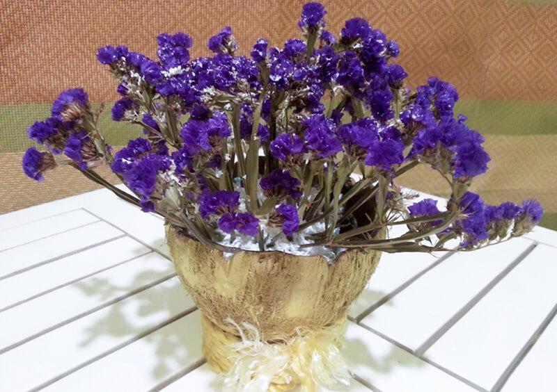Ý nghĩa hoa salem trong cuộc sống