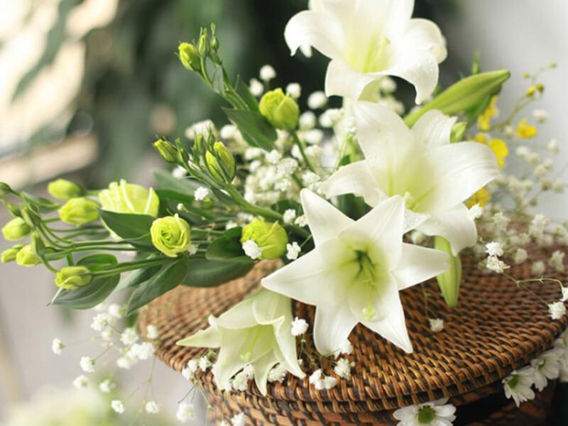 đặc điểm hoa loa kèn