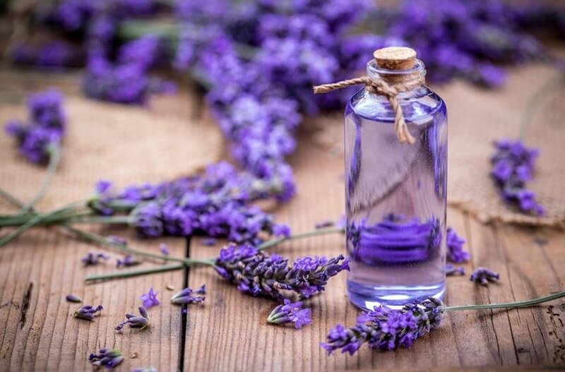 ý nghĩa của Hoa lavender khô