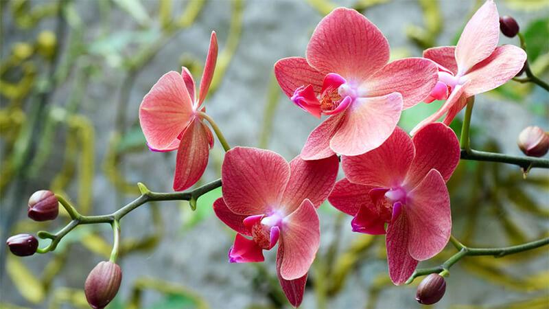 ý nghĩa của hoa lan trong tình yêu