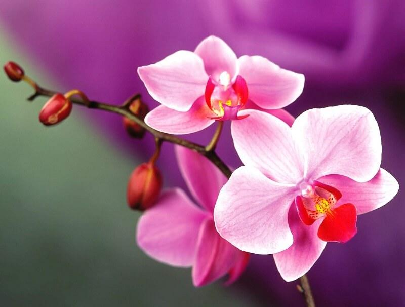 Nên tặng hoa lan vào dịp nào