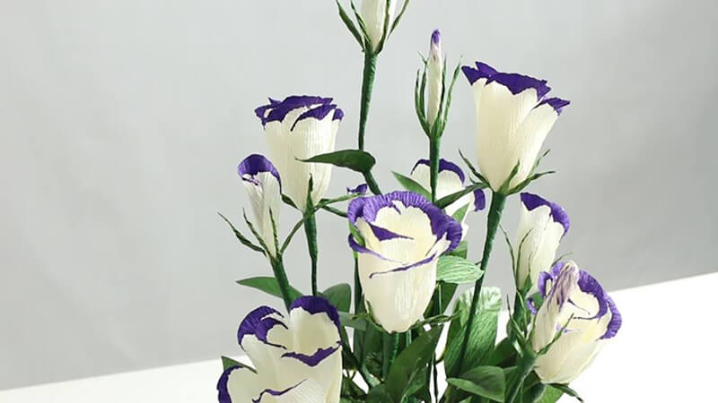 Hoa lan tường