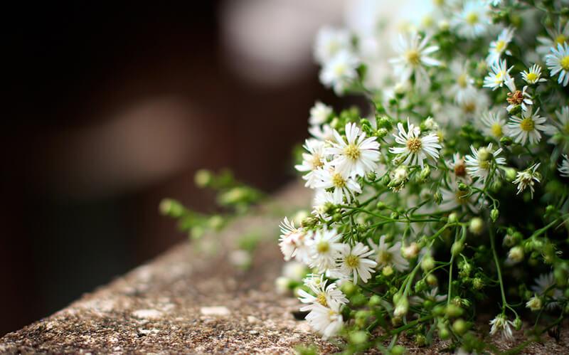 Khi nào nên tặng hoa Thạch Thảo