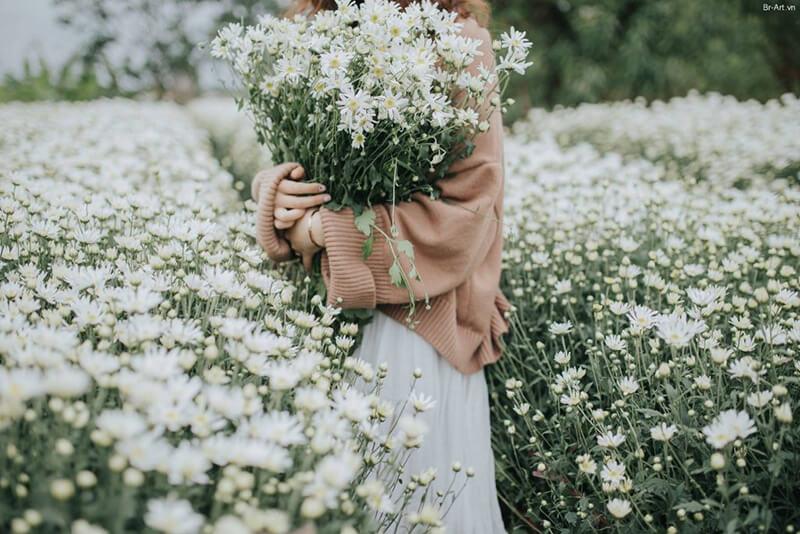 Ý nghĩa hoa baby trong tình yêu