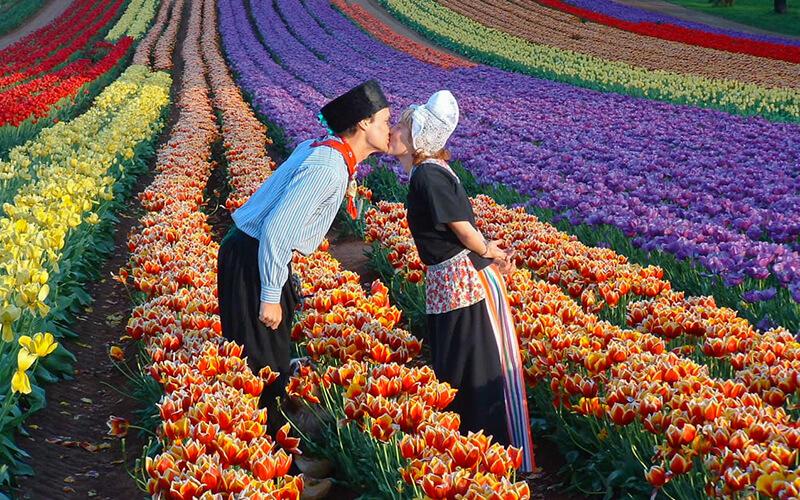 Ý nghĩa hoa Tulip trong tình yêu