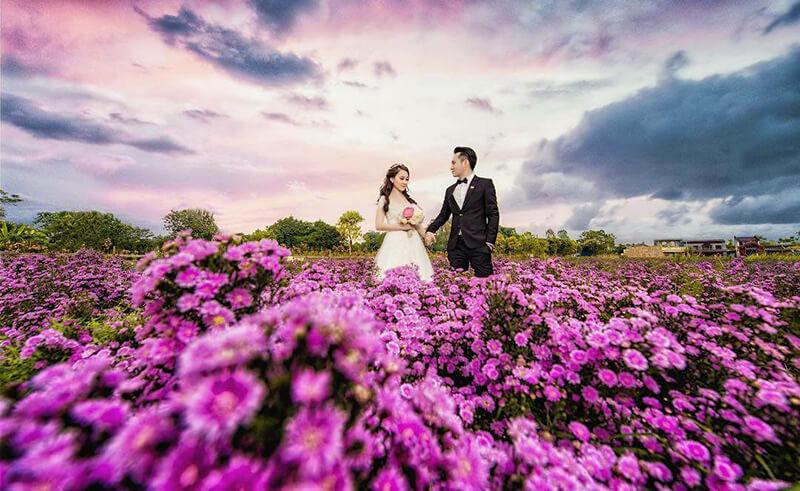 Ý nghĩa hoa Thạch Thảo trong tình yêu