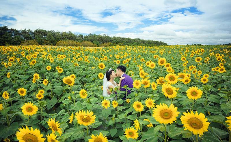 Hướng dương vàng là sự ràng buộc hạnh phúc