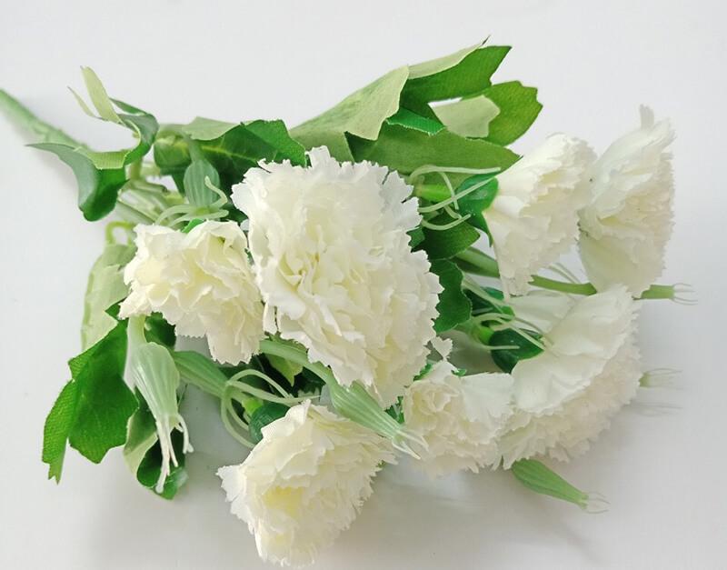 Cẩm chướng trắng