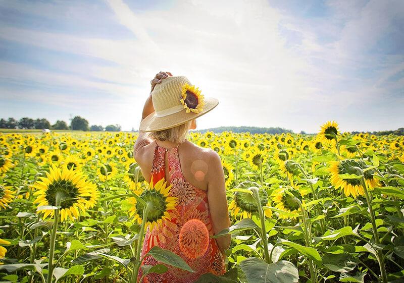 ý nghĩa hoa hướng dương trong cuộc sống