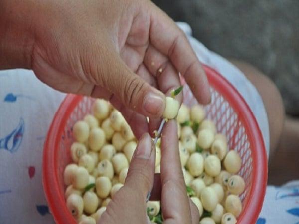 nguyên liệu nấu chè hạt sen