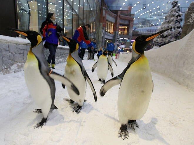 Vui chơi cùng chim cánh cụt
