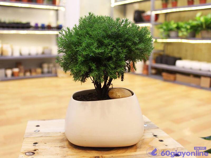 cây phong thủy theo tuổi thân