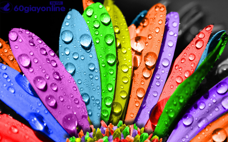 Ý nghĩa của màu sắc trong cuộc sống