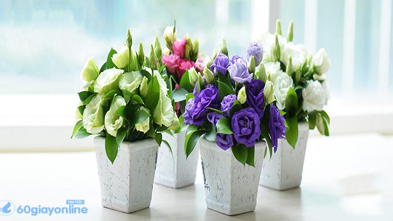 Hoa cát tường còn là một loài hoa mang đến sự may mắn