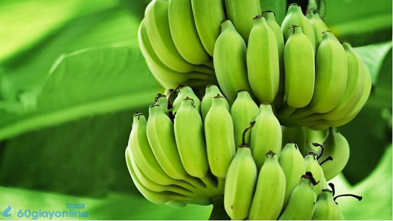 Chuối xanh mang lại hiệu quả cao trong điều trị dạ dày