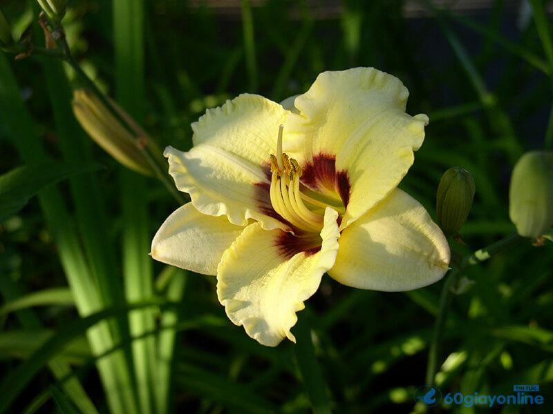 Hoa huệ tượng trưng cho 1 tâm hồn thánh thiện