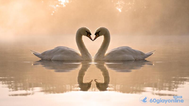 Tình yêu nào cũng đòi hỏi sự chung thủy của cả 2