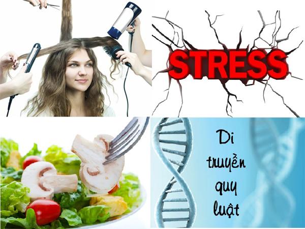 Các nguyên nhân gây rụng tóc thương gặp