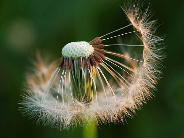 Vai trò của gió đối với sự phát triển, duy trì và phân tán của các loại sinh vật