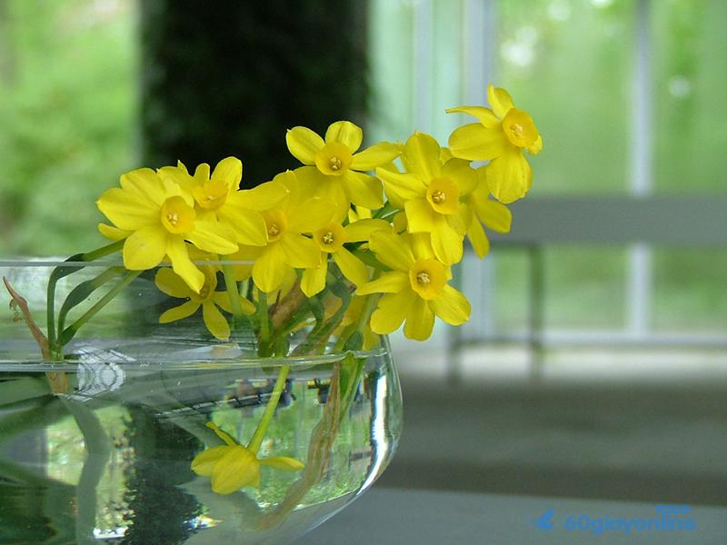 Theo phong thủy thì có những loại hoa mang lại may mắn